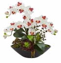 """21"""" Phalaenopsis Orchid Flower and Mixed Succulent Garden Artificial Arrangement in Black Vase - White"""