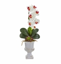 """25"""" Phalaenopsis Orchid and Succulent Artificial Arrangement in Urn - White"""