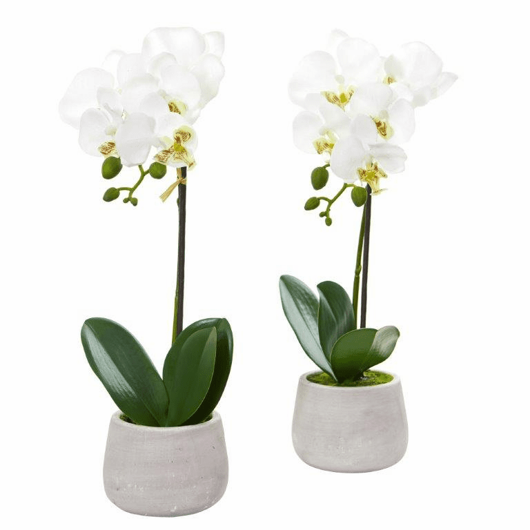 "15"" Phalaenopsis Orchid Artificial Arrangement (Set of 2)"