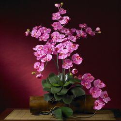 """31"""" Phalaenopsis Silk Orchid Flower Stems w/Leaves (Set of 6 Stems - Non Potted) - Dark Pink"""