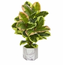 Rubber Leaf Artificial Plant in Marble Finished Vase (Real Touch) - N/A