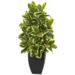 """50"""" Artificial Rubber Plant with Black Wash Planter"""