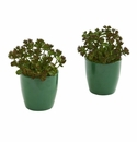 "7"" Sedum Succulent Artificial Plant in Green Planter (Set of 2)"