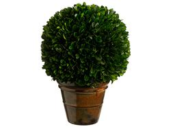 """Set of 2 - 10.2"""" Preserved Boxwood Ball Topiaries"""