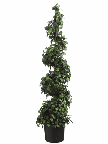 "SET OF 2 - 48"" CITRUS LEAF SPIRAL TOPIARIES"