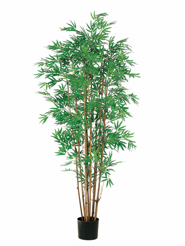 Set of 2 - 5' Japanese Bamboo Silk Tree