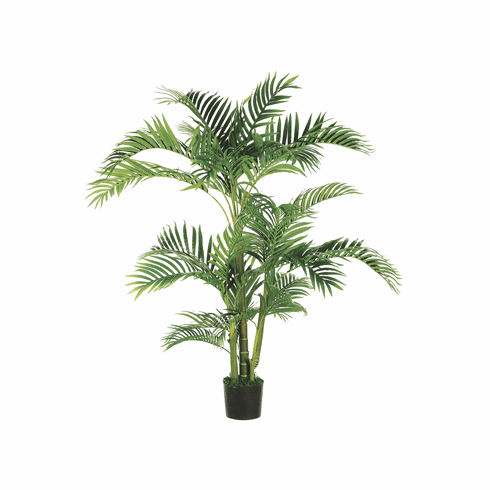 Set of 2 - 5' Tropical Kentia Silk Palm Trees in Plastic Pots