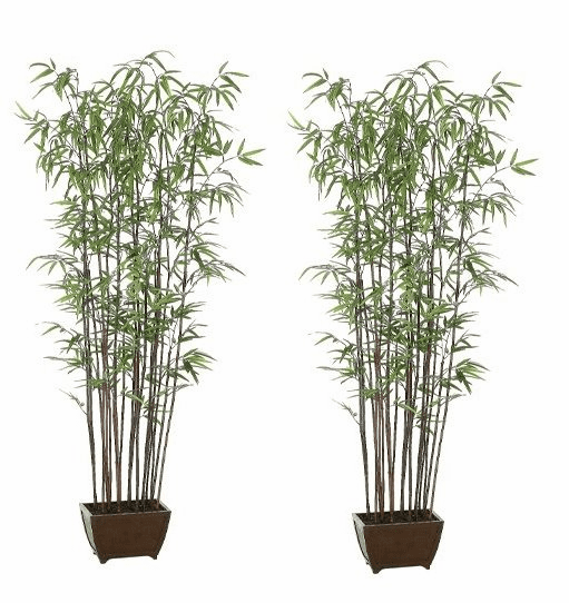 Set of 2 - 6' Bamboo Wall Silk Trees With Dark Trunks