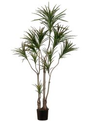Set of 2 - 6' Dracaena Marginata Artificial Trees - Indoor/Outdoor (Shown in Green)