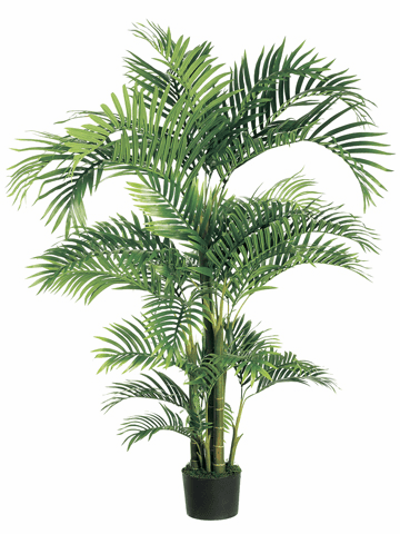 Set of 2 - 6' Tropical Kentia Silk Palm Trees