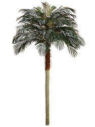 Set of 2 - 7.5' Phoenix Silk Palm Trees - Non Potted