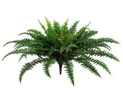 """26"""" Artificial Fern Plants with 67 fronds - Set of 6 - Non Potted"""