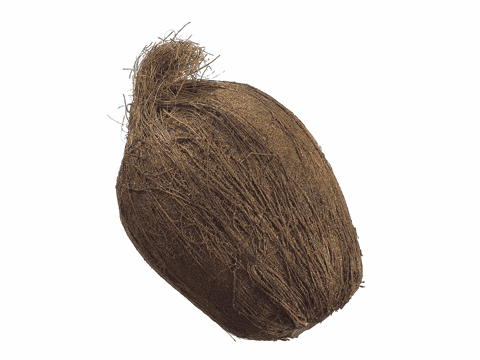 "Set of 6 - 7"" Weighted Artificial Coconuts"