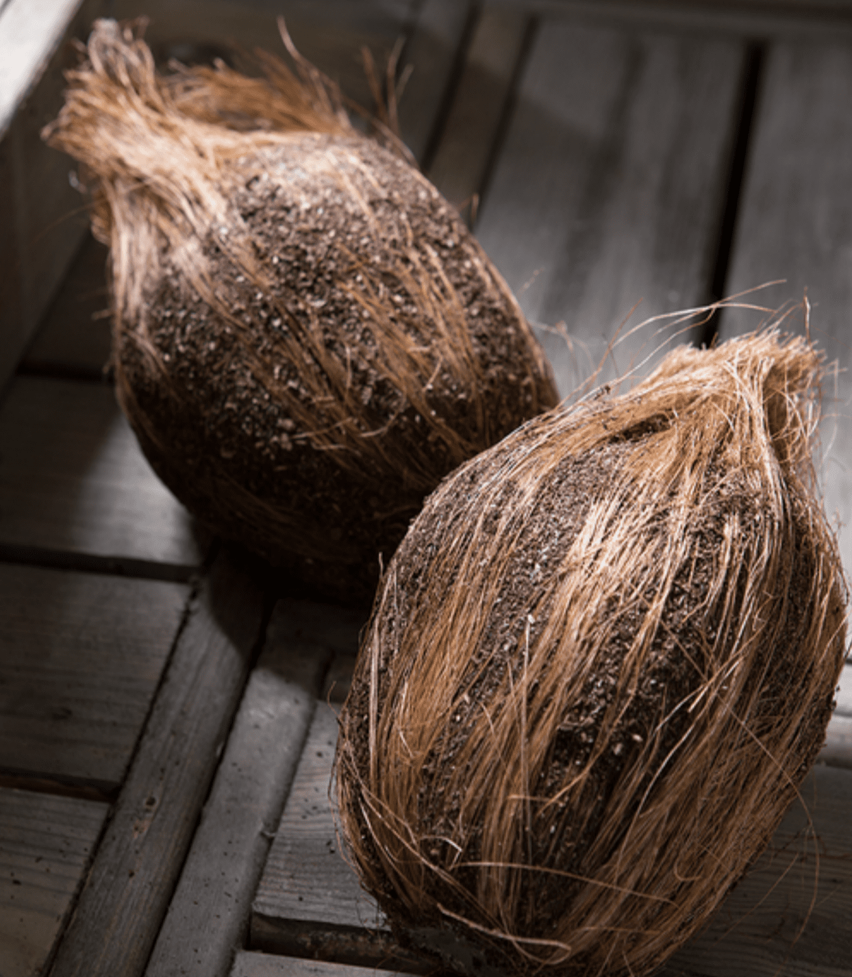 """Set of 6 - 7"""" Weighted Artificial Coconuts"""