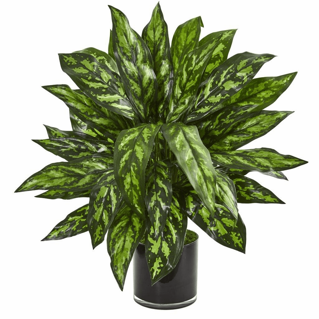 """27"""" Silver King Artificial Plant in Black Glass Vase"""