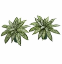 "8"" Silver Queen Artificial Plant in Green Planter (Set of 2)"