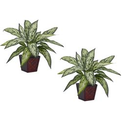 """12"""" Silver Queen Silk Plant (Set of 2)"""