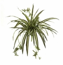"23"" Artificial Spider Plant Bush (Set of 4) - Non Potted"