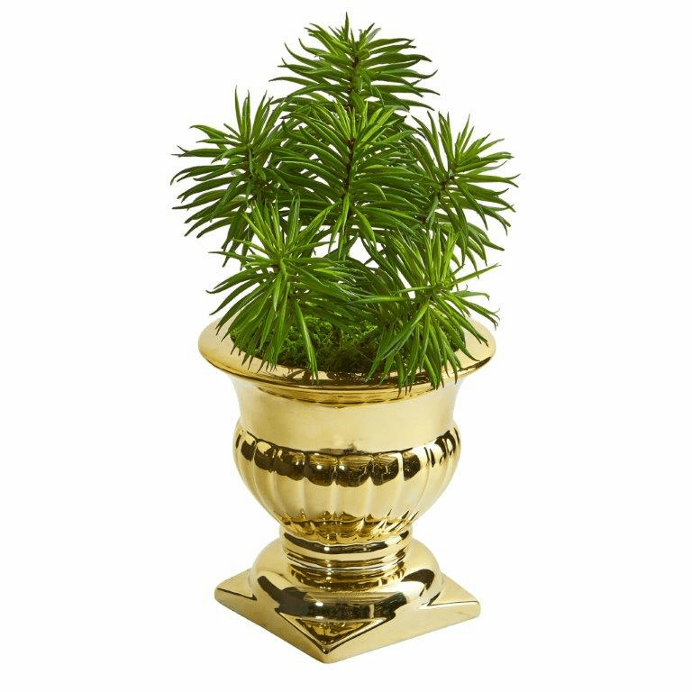 "11"" Spiky Succulent Artificial Plant in Gold Urn"