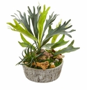 Staghorn and Succulent Artificial Plant in Weathered Planter - N/A