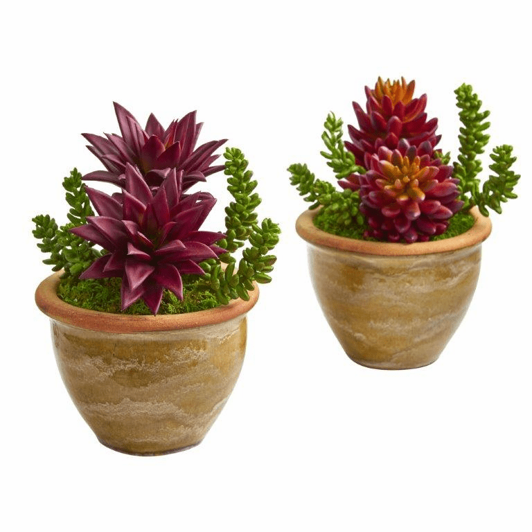 "11"" Succulent Artificial Plant in Ceramic Planter (Set of 2)"
