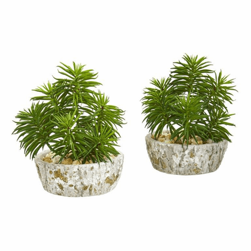 Succulent Artificial Plant in Weathered Oak Planter (Set of 2)