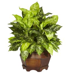 """24"""" Variegated Dieffenbachia with Large Hexagon Silk Plant"""