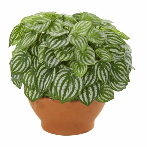 Watermelon Peperomia Artificial Plant in Clay Planter (Real Touch)