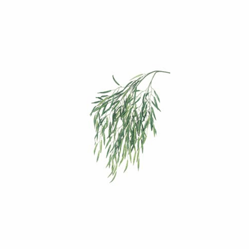 Weeping Willow Artificial Tree Branch (1 Doz) - 47 inch