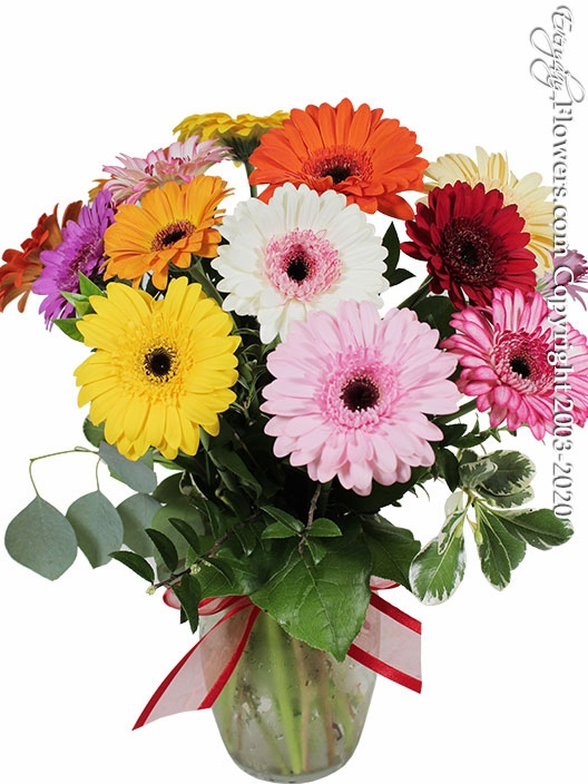 Bakers Dozen Mini Gerbera Daisies