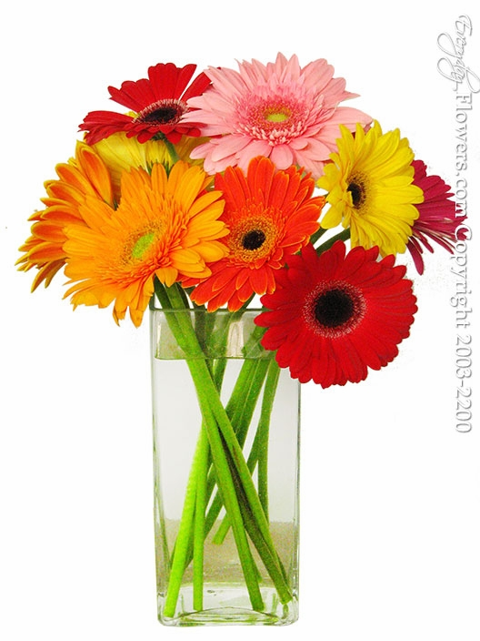 """Just Gerbera Daisies <br><p style=""""font-size:14px"""">Support Our Local California Farmers And Purchase California Grown.</p><img src=""""https://sep.yimg.com/ty/cdn/yhst-16180168343299/california-grown.png"""">"""