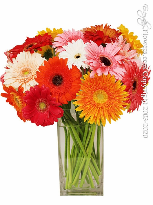"Just Gerbera Daisies Deluxe <br><p style=""font-size:14px"">Support Our Local California Farmers And Purchase California Grown.</p><img src=""https://sep.yimg.com/ty/cdn/yhst-16180168343299/california-grown.png"">"