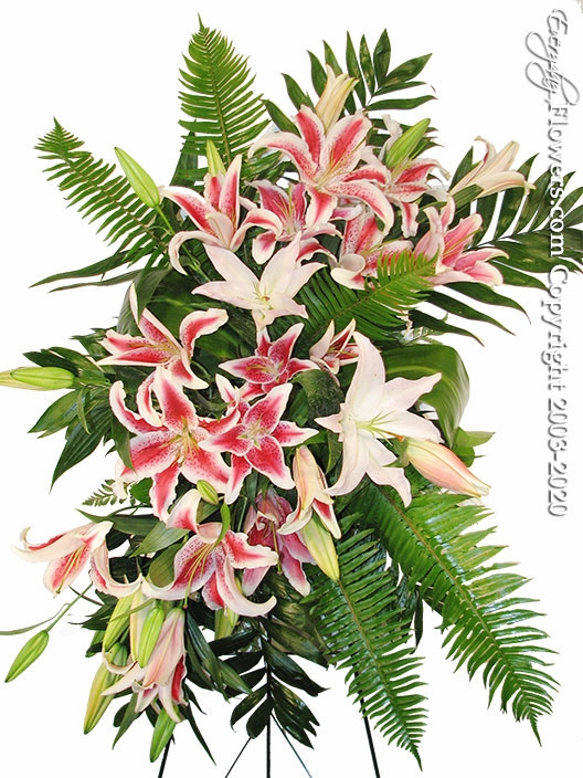 "Stargazer Lily Funeral Spray <p style=""color:red;"">Please Contact Us For Availability</p>"