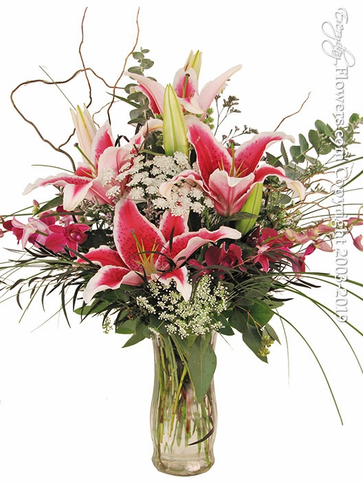 Stargazers And Orchids