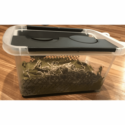 125 Large Silkworms With 12 oz of Food and Plastic Tote