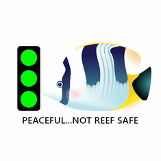 Peaceful Not Reef Safe