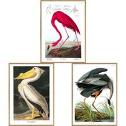Birds of America Audubon Wall Art - S/3