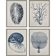Coastal Shell S/4 Wall Art