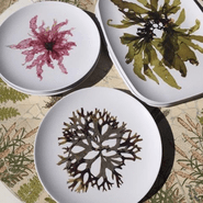 Melamine Botanical Plates and Platters