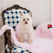 Pet Pink Mink Blanket