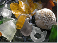 Sea Glass and Barnacles Photo
