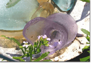 Sea Glass & Spring Flowers Photo