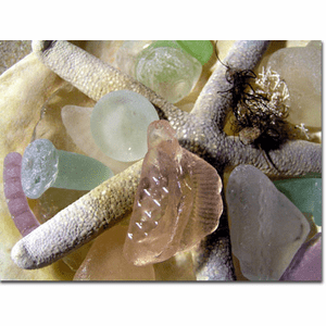 Sea Glass & Starfish Photo