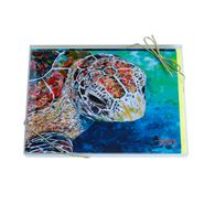 Turtle Series Boxed Note Cards