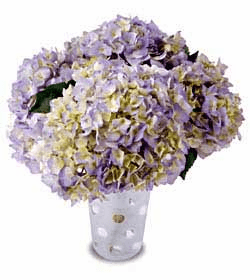 The FTD® Hydrangea Dreams™ Bouquet