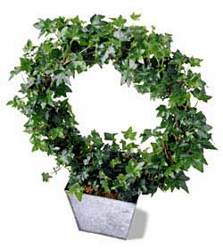 The FTD® Ivy Topiary Wreath