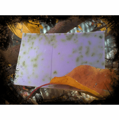 Witch's Herbs Soap