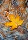 Maple Leaf by AHedderick SOLD