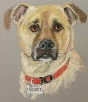 Pet Pastel Portrait by APinardi