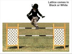 Lattice Kid jump